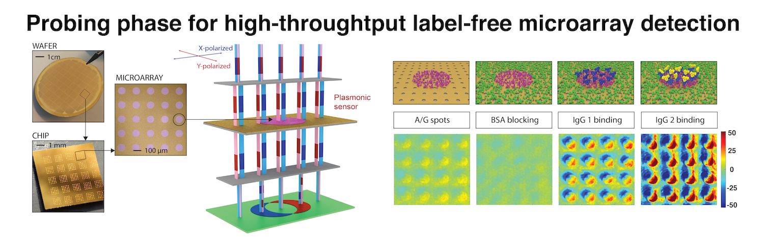 Probing phase for high-throughput label-free microarray detection